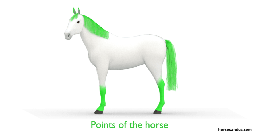 The 3 base horse colours. Points of the horse