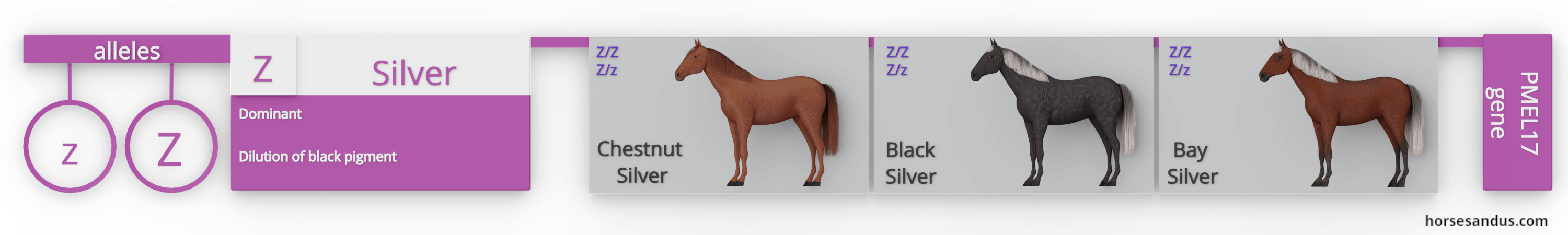 Equine Silver dilution gene