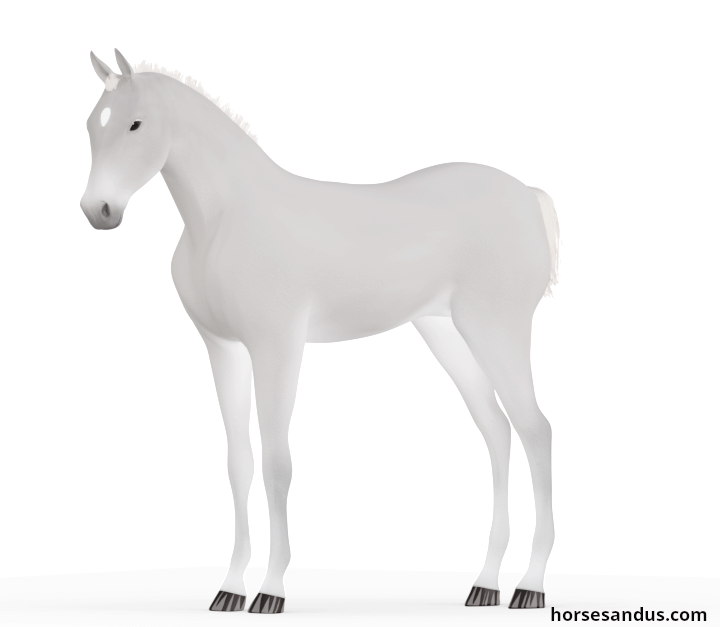 Silver diluted foal