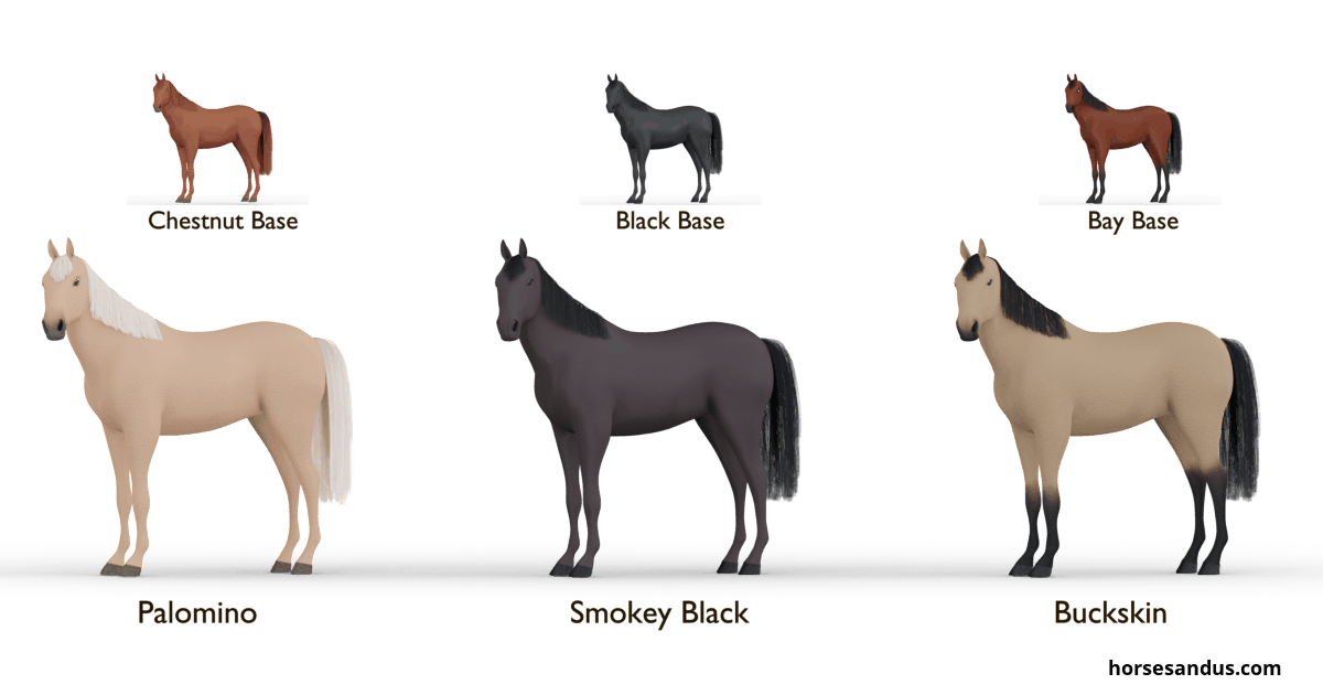 Equine Cream gene - single dilutes. Palomino, Smokey black, Buckskin